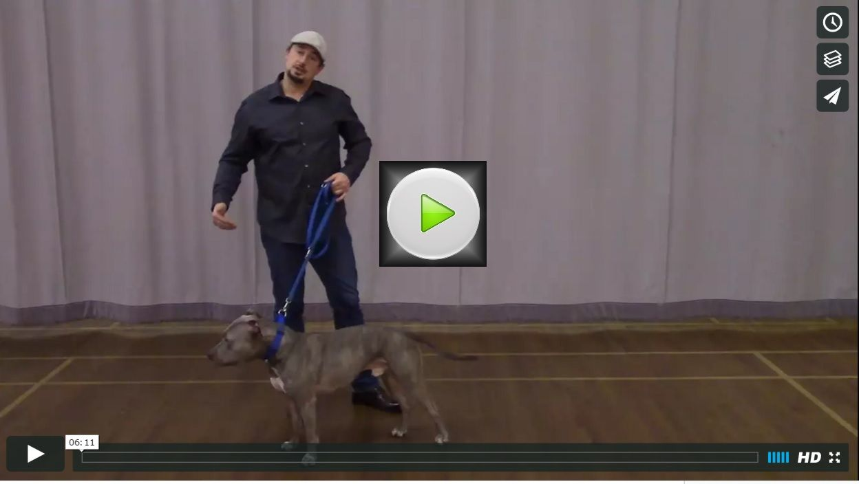How To Lead Your Dog To Heel In A 180 Degree Turn With No Tension