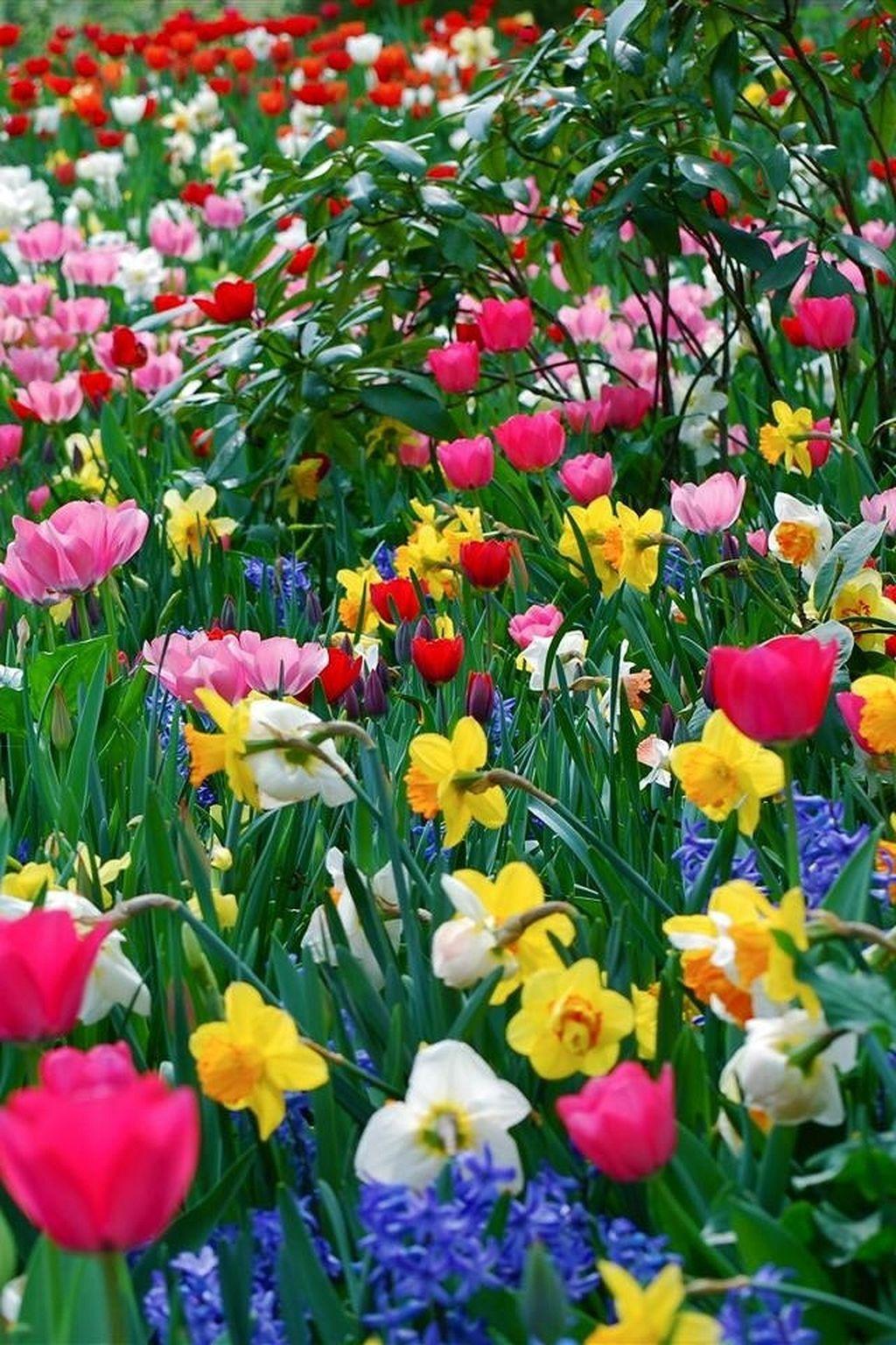 Awesome Beautiful Wild Flower Garden Httpsgardenmagz