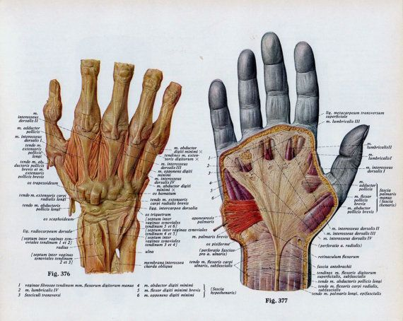 e69fc3d7b091e098e0ed2c83a23a2751 antique medical hand diagrams google search arm 'hand tattoo