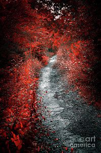 Autumn Photograph - Old Path In Red Forest by Elena Elisseeva