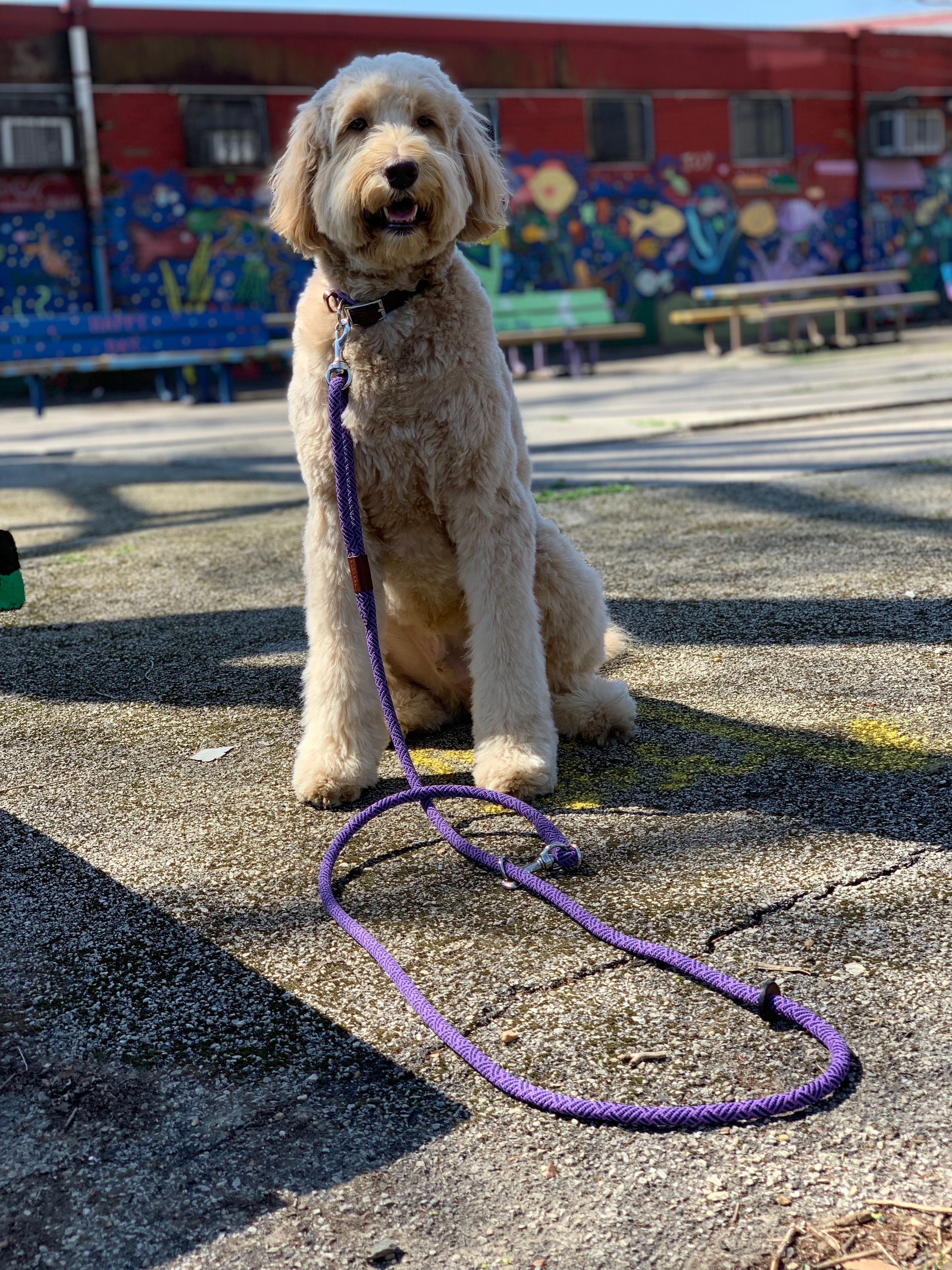 Rope Leash Easiest Dogs To Train Dog Training Dog Care