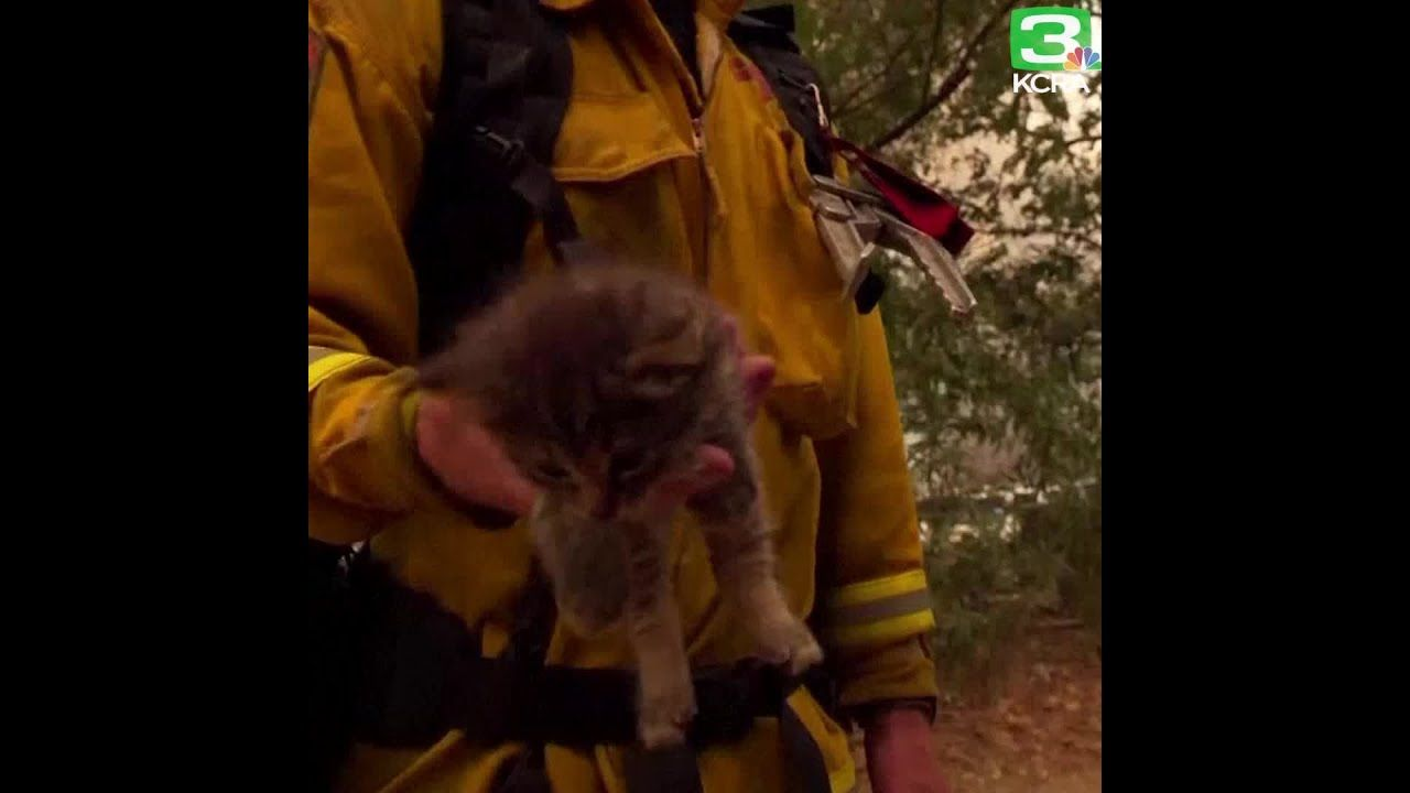 Kitten Saved From Flames Of The Carr Fire Https Youtu Be Tm5fujtb4e8 Kitten Animal Stories Flames