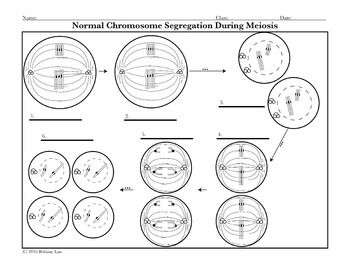 mitosis and cytokineses coloring pages - photo#19