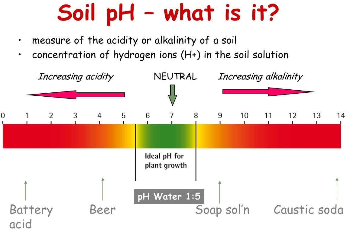 Kenneth hein knows the importance of ph balance in soil for 4 parts of soil