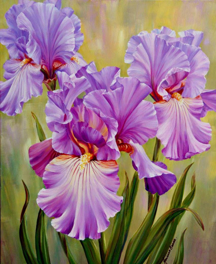 Открытки цветы-ирисы