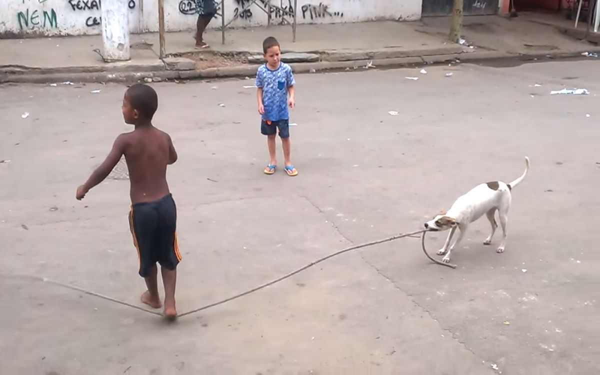 Brilliant dog is the worlds best jump rope partner video