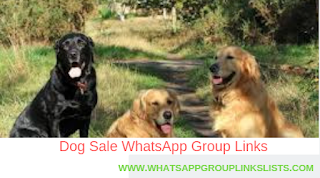 Join Dog Sale Whatsapp Group Links List Dogs For Sale Dogs Group Of Dogs