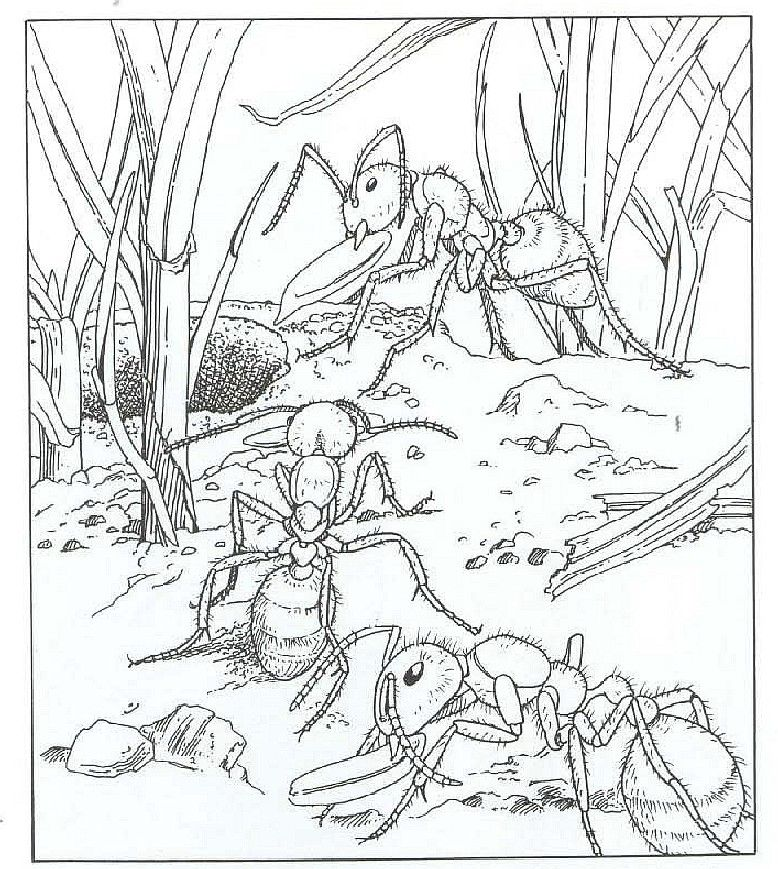kleuterdigitaal mier kleurplaat 02 kleurplaten mieren