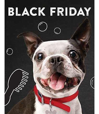 Black Friday Plus Petsmart Grooming Coupon Codes For Saving Http Coupon4all Com Stores Petsmart Coupons Petsmart Grooming Coupons Petsmart Grooming Petsmart