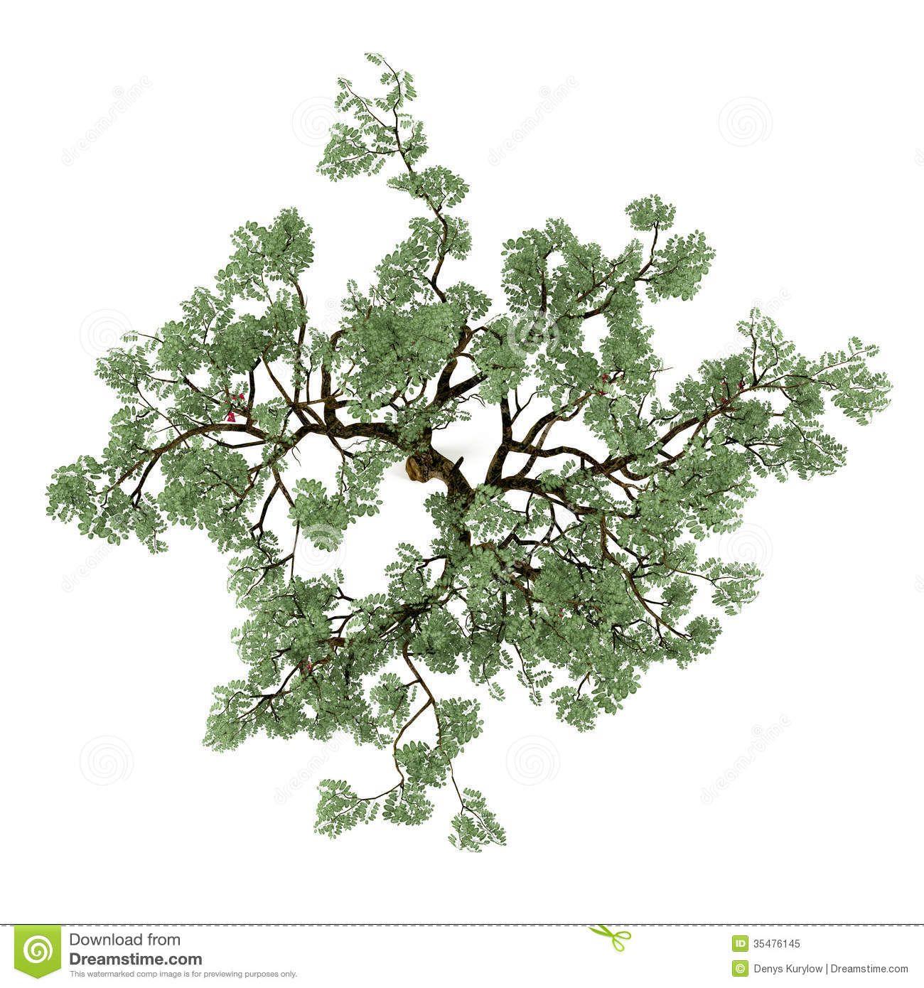 top pin tree of - photo #22