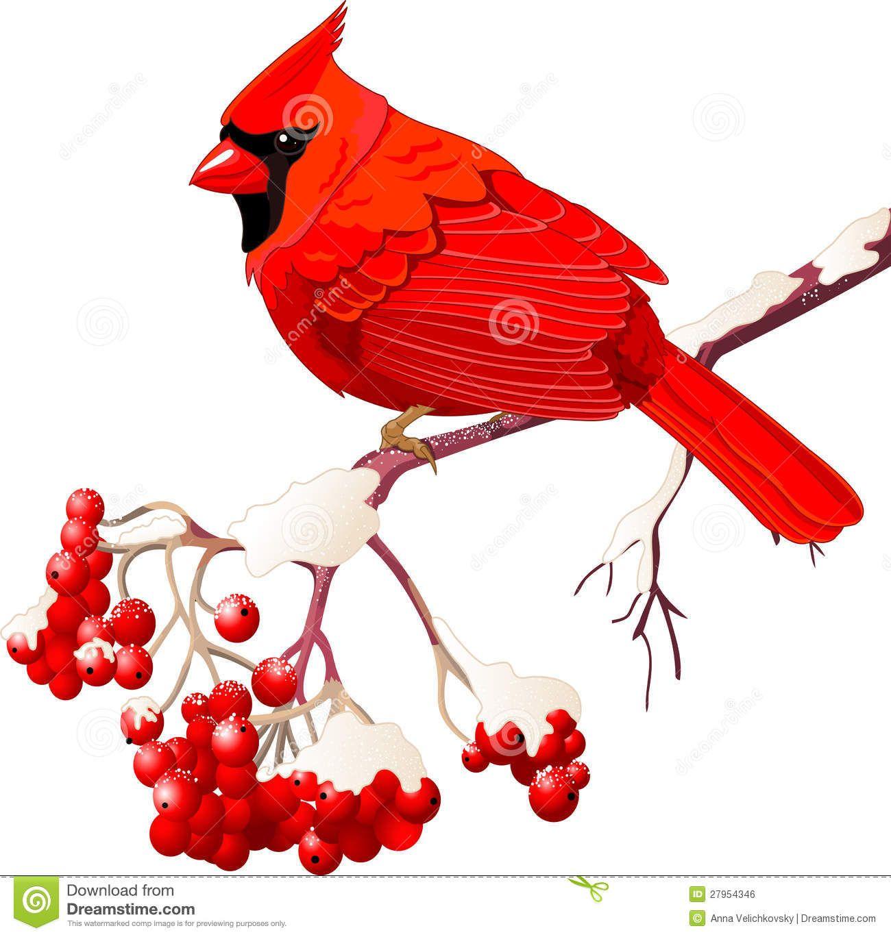 cardinal bird free clipart google search starbucks pinterest rh pinterest com Free School Clip Art Cardinal free christmas cardinal clipart