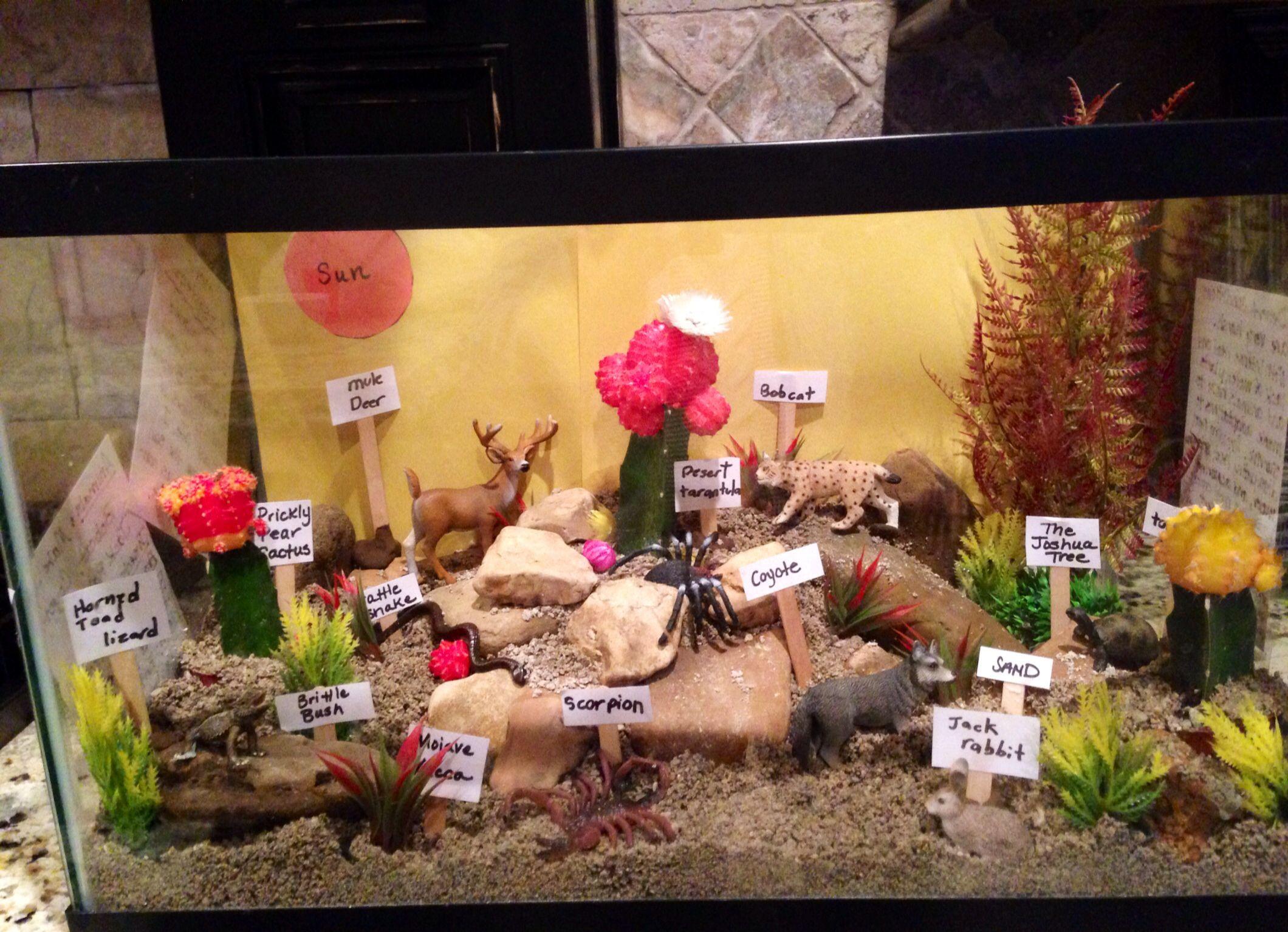 Desert Ecosystem 4th Grade Science Project