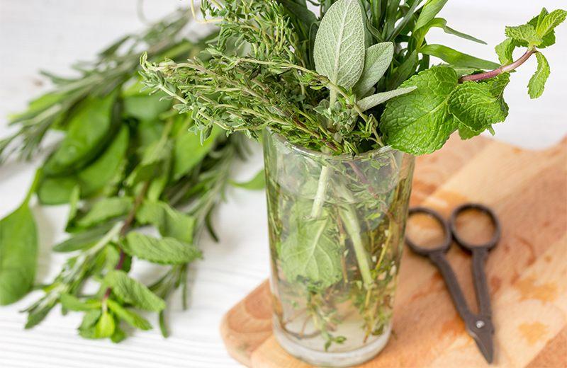 Indoor Herb Garden 10 Herbs You Can Grow In Water Herbs Indoors