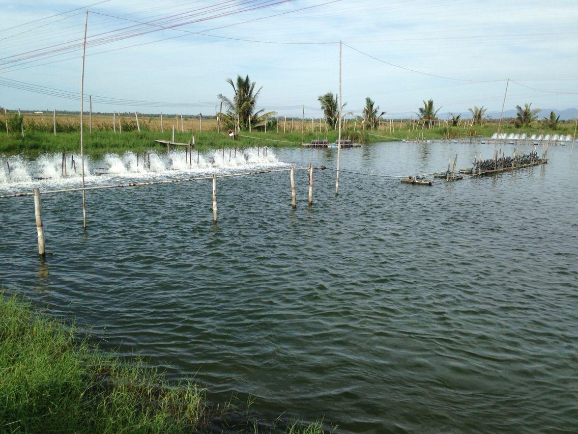 นาก ง shrimp u0026 fish farm pinterest shrimp farming