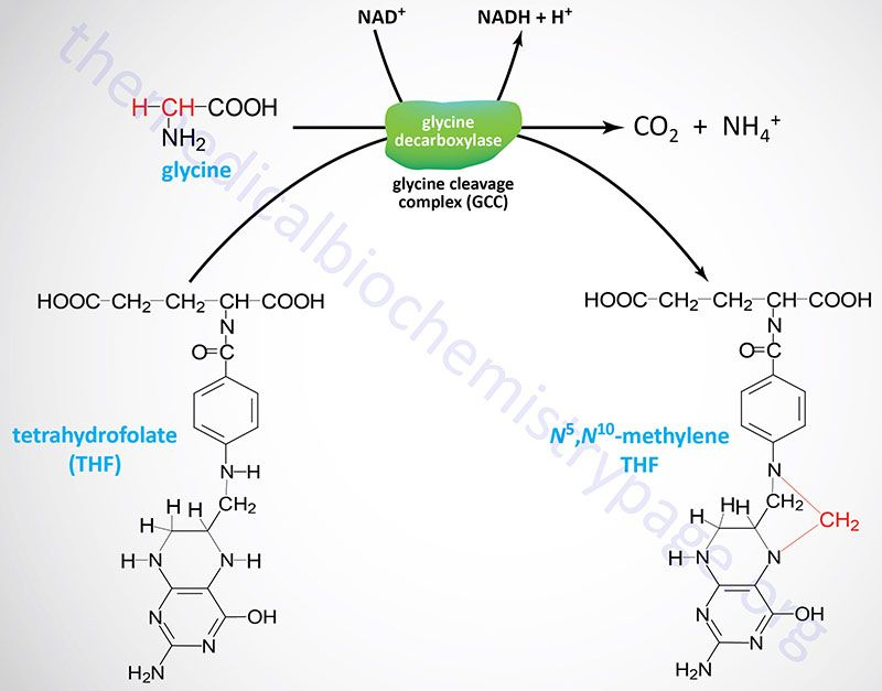 Reaction Catalyzed By Glycine Decarboxylase  Nonessenetial Amino