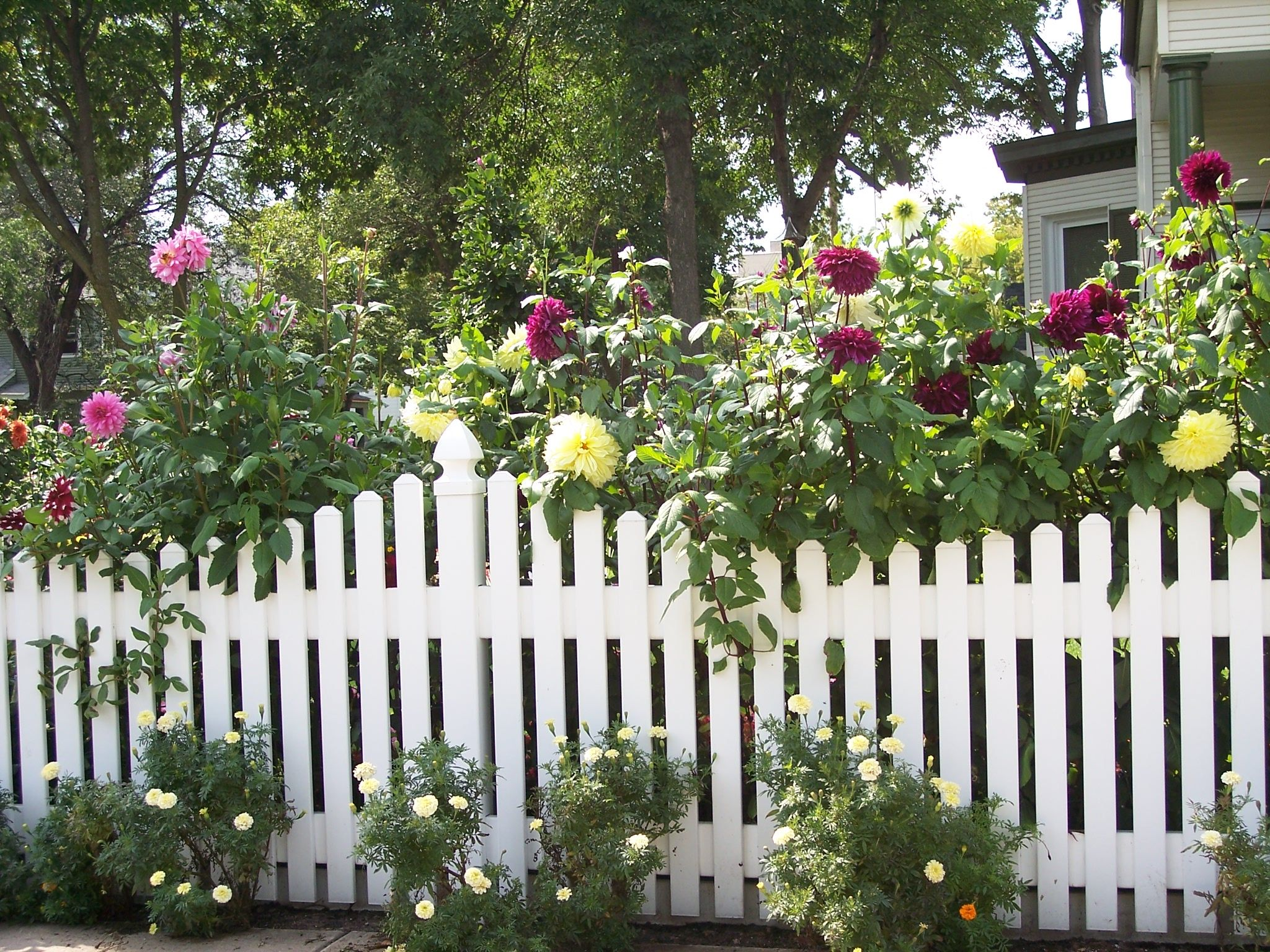 fence against the background of flowers the picturesque scenery