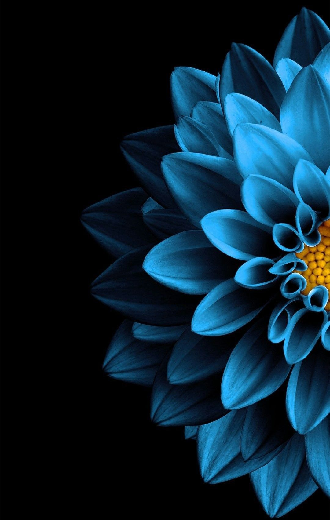 Blue Flower Black Background Wallpaper