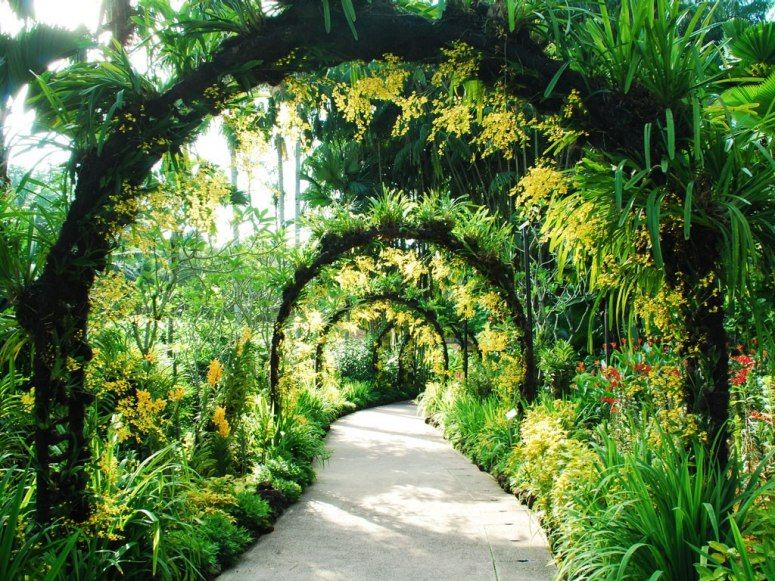 Beautiful Gardens In The Middle Of Cities Singapore Botanic Gardens Botanical Gardens Beautiful Gardens