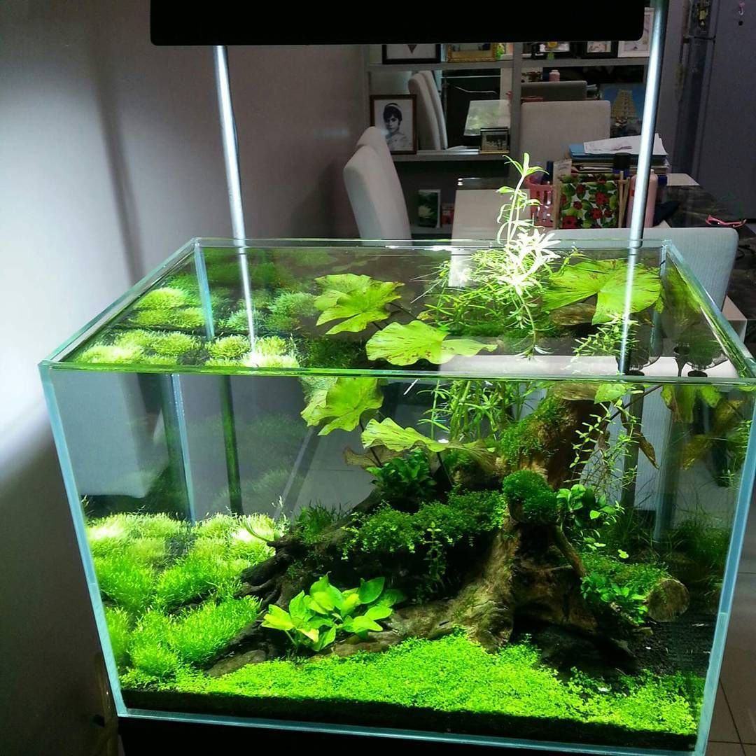 Superb Aquariums