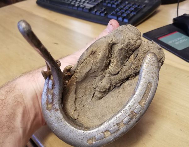 This hoof came from a mule that stepped in a snowfilled