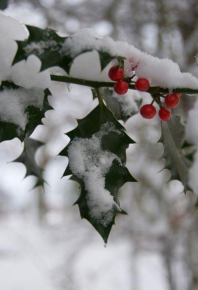 Season's Greetings by Ali's view on Flickr.