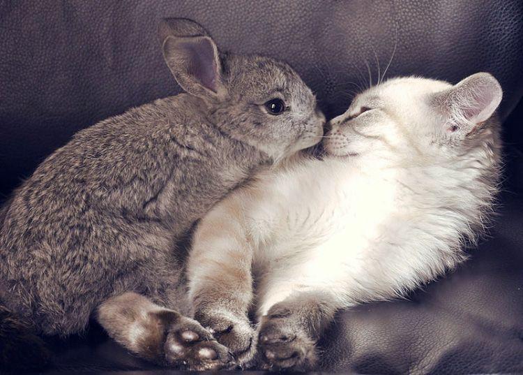 Картинки целующихся зайчиков, приколы