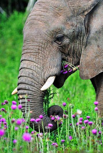 """Pink Elephant"""" by John Deakin.   Plus...I love purple & green, especially with an elephant in it!"""