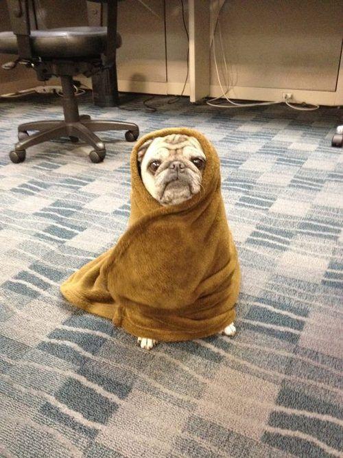 I'm an ewok.