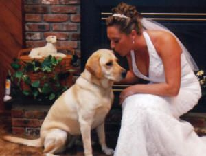 Klondike Labrador Puppies For Sale Labrador Puppies For Sale Labrador Puppy Labrador Retriever