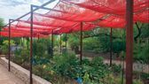 #vegetable # #gardening # #arizona # #jewish # #fall # #life#ari#gardenia #gardena #landscapedesign #wooddesign #characterdesign #gardenlife #gardenparty #gardens #gardener #designboom #nailist #nailsonfleek #nailinspiration #designed #designdesobrancelhas