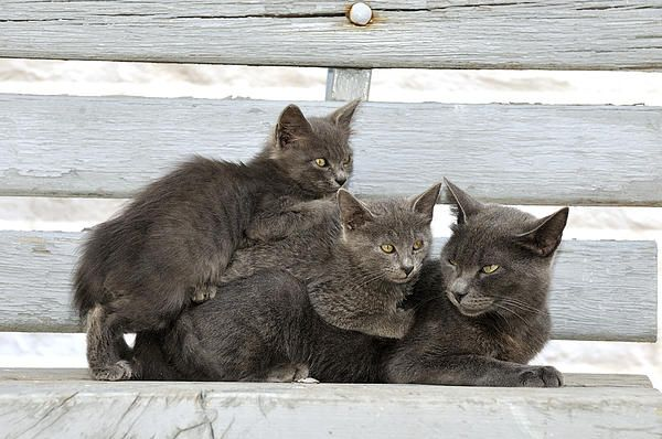 Mother And Kittens