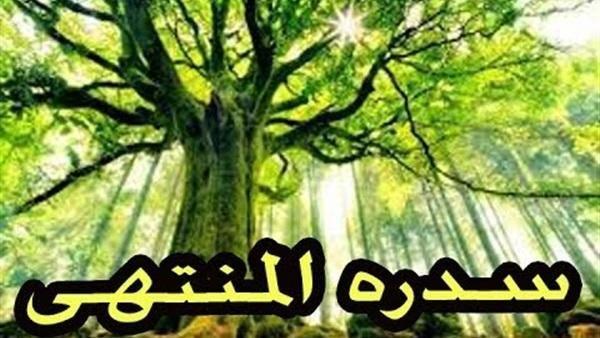 ما هي سدرة المنتهى المذكورة في القرآن الكريم Plants