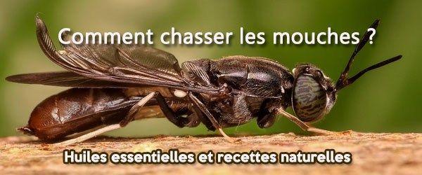 Les solutions naturelles pour en finir avec les mouches