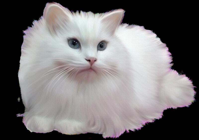 Белый котенок картинки для детей