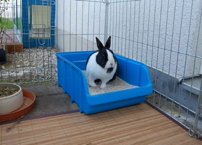 Stubenreinheit Mit Bildern Kaninchengehege Gehege Kaninchen Kaninchenkafig