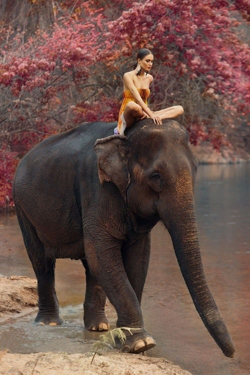 pictures-pictures-of-a-girl-having-sex-with-a-elephant-nude-hot-teen