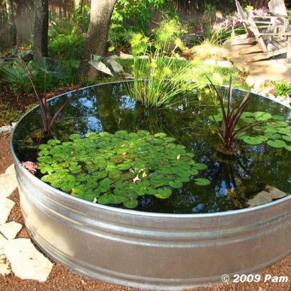 Cómo hacer un estanque acuático con plantas y peces Césped