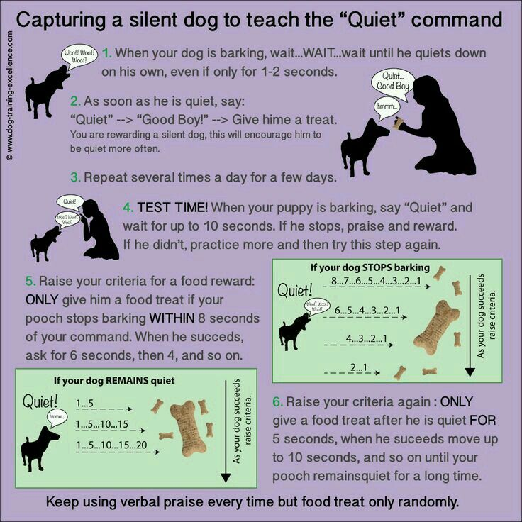 Pin By Tuuli Kaappinen On Our Fur Baby Stop Dog Barking Training Tips Dog Training Obedience