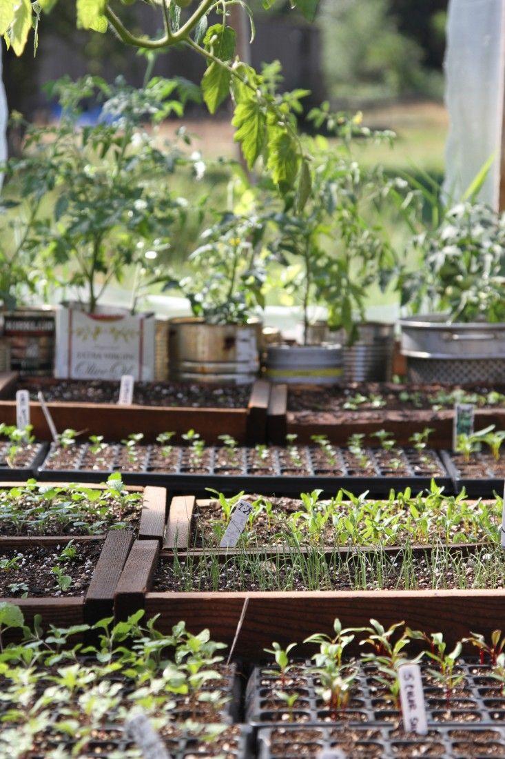 growing vegetables in the wilderness gardenista