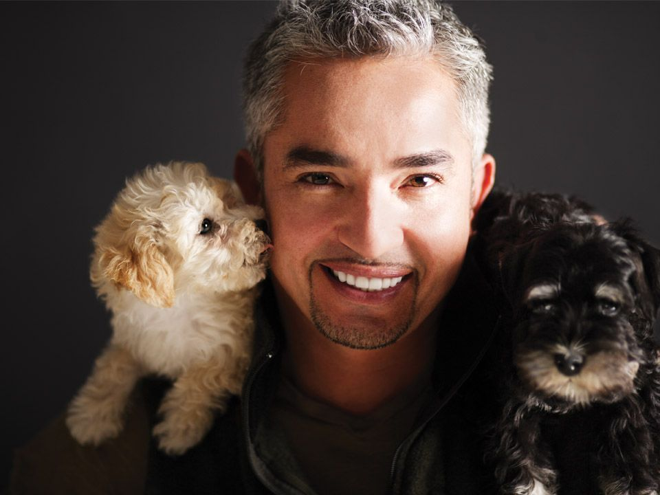 Cesar Millan Live! - March 13, 2014