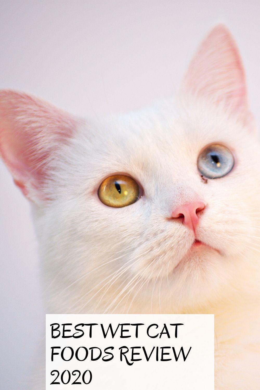 Best Wet Cat Foods Review 2020 In 2020 Cat Food Reviews Best Cat Food Wet Cat Food