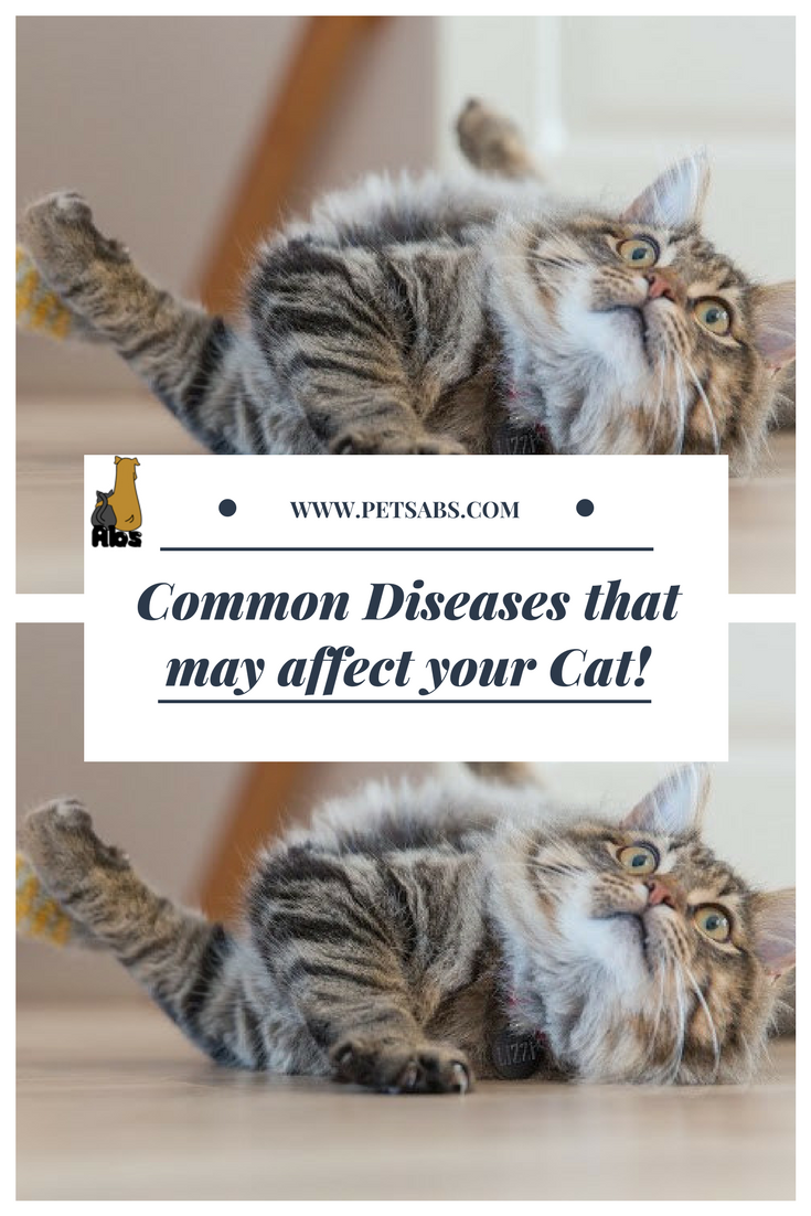 Here Are The Most Common Diseases That May Affect Your Cat Sick
