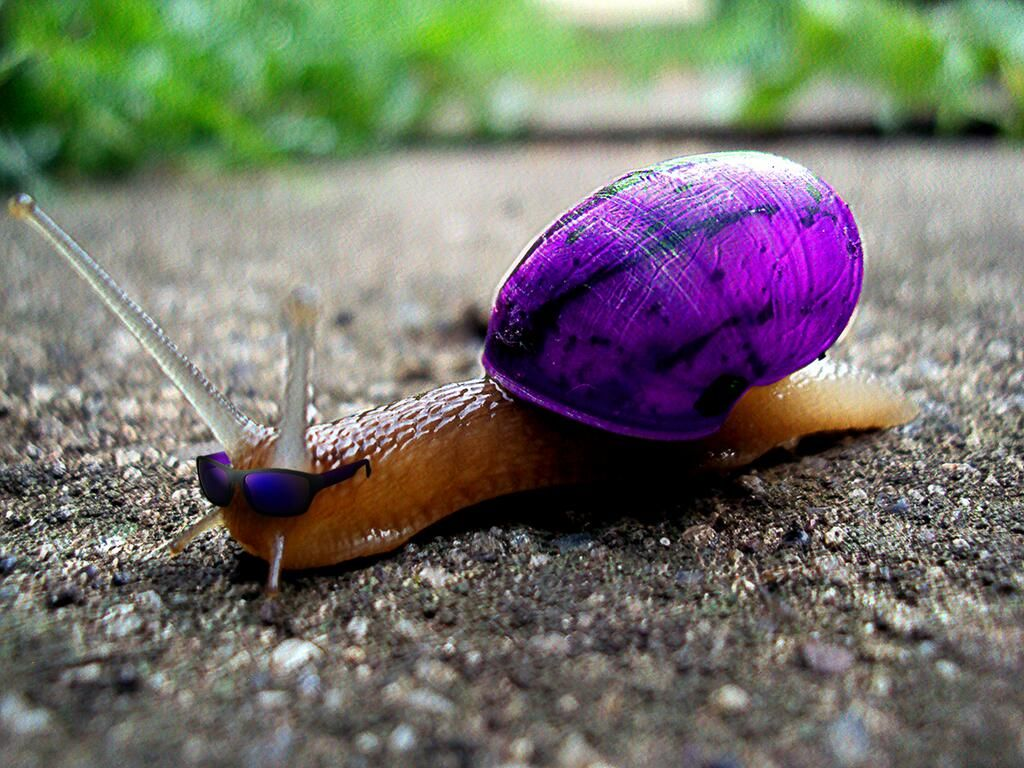 Purple Snail Snail Purple Animals