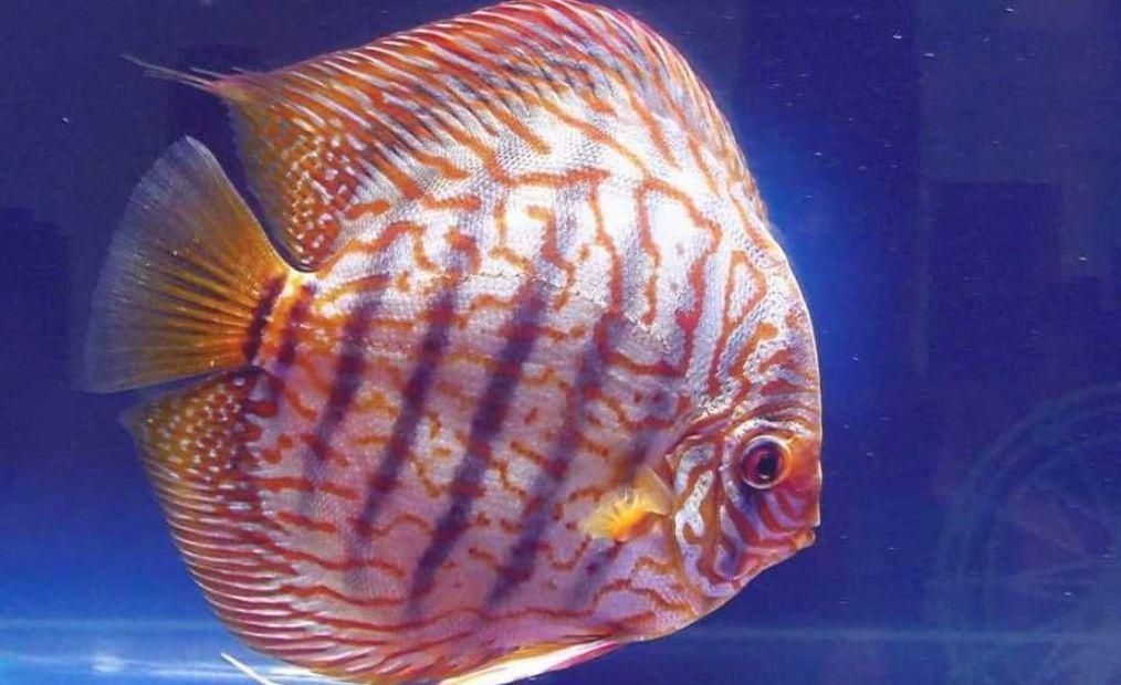 Pin On Tropical Fish