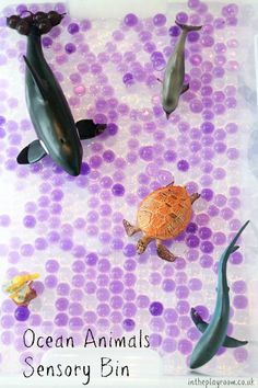 Ocean Animals Sensory Bin In The Playroom Sensory Activities Toddlers Sensory Bins Ocean Animals