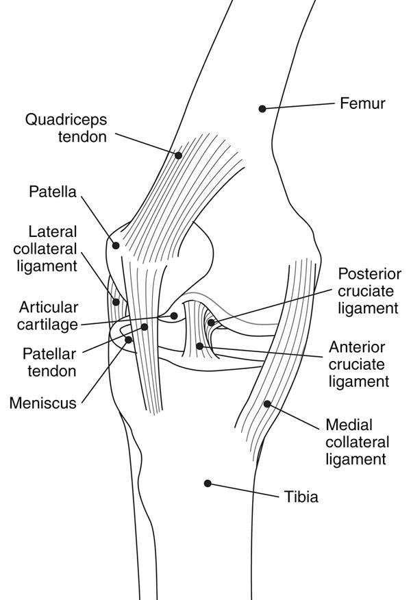 acl surgery    swollen leg