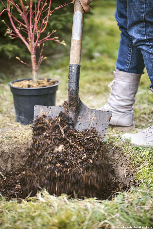 Planter Des Tomates En Pot arbuste en pot : comment le planter correctement ? | arbuste