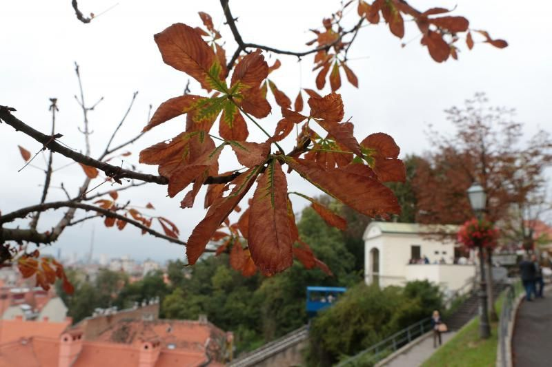 Zagreb Funicular Is A True Survivor And A Symbol Of Our City Zagreb Visit Croatia Capital Travel Love Lenuci Horseshoe Downtown Dolac Zagreb Croatia
