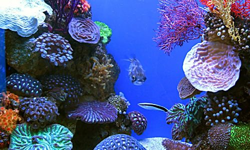 how coral reefs come about Building a better coral reef as reefs die off the day may come when many of the reefs off florida and australia will be ones created by scientific.