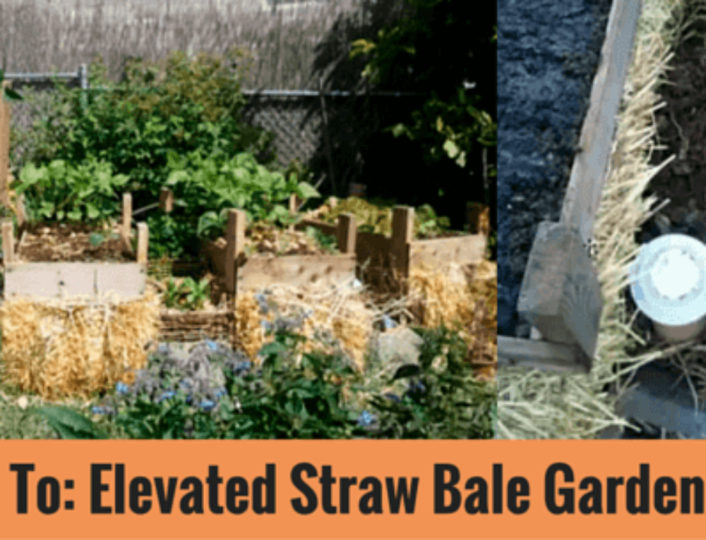 Idea: Marvelous Elevated Straw Bale Garden Bed Design ... on vegetable garden fence ideas, raised garden on hill, vegetable garden trellis ideas, raised garden fence design, raised garden with fountain, best vegetable container ideas, raised garden wall ideas, raised vegetable beds, small garden ideas, vegetables in flower garden ideas, raised vegetable gardens for beginners, landscape design ideas, raised container gardens ideas, flower bed design ideas, cute vegetable garden ideas, garden beds on sloped backyards ideas, landscape vegetable ideas, raised garden planter boxes ideas, raised veggie garden ideas, cool fall garden ideas,